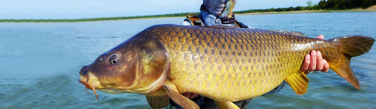 Michigan Fly Fishing Guides   Guided Fly Fishing Trips Tours